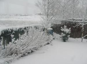snow-garden