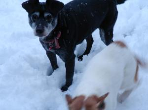 snow-nigel